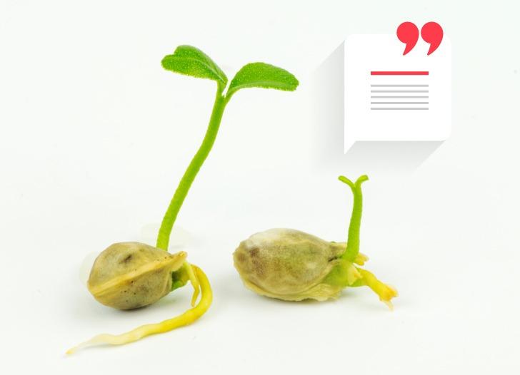 ¿Qué es la frase semilla?